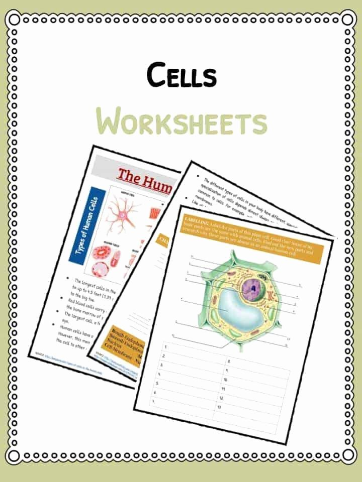 Cell theory Worksheet 7th Grade Lovely Cell Facts Information & Worksheet