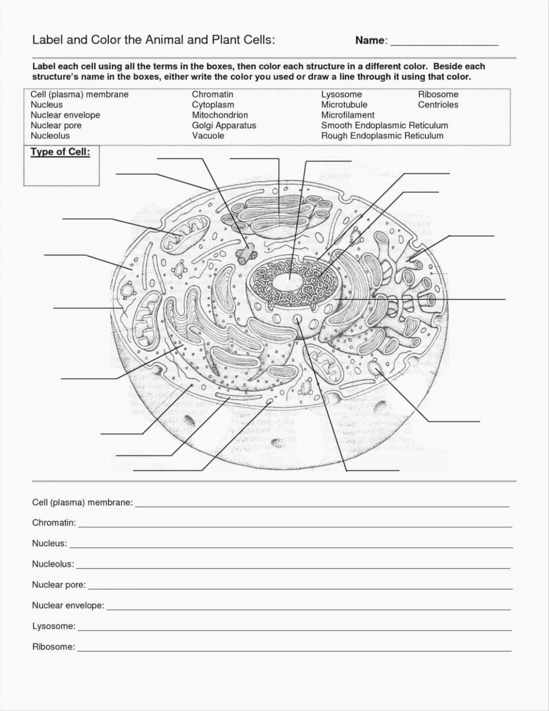 Cells Alive Worksheet Answer Key Free Cells Alive Cell Cycle Worksheet