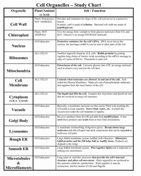 Cells and their organelles Worksheet Kids Cells and their organelles Worksheet
