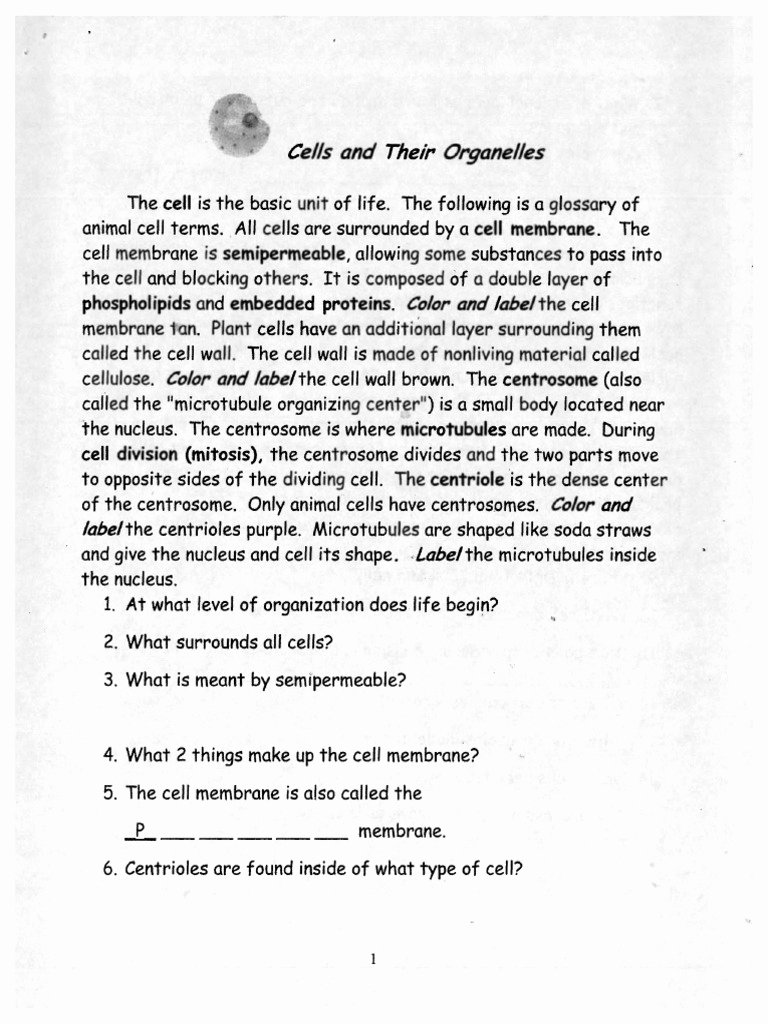 Cells and their organelles Worksheet Lovely Cells and their organelles Packet
