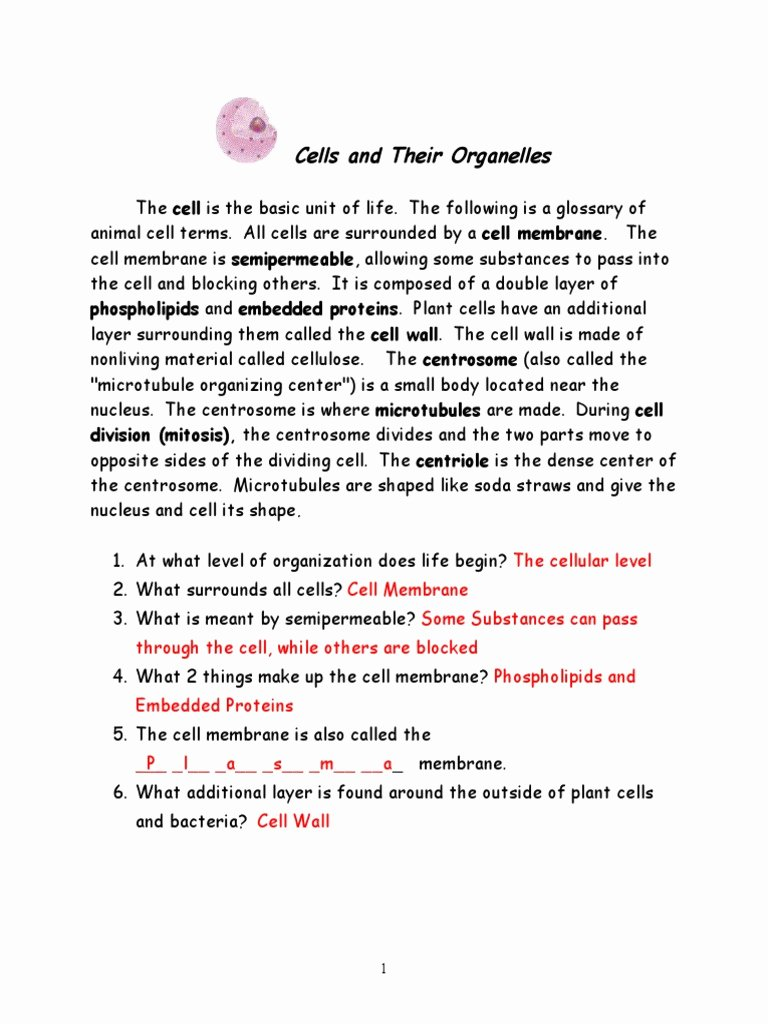 Cells and their organelles Worksheet New Cells and organelles Newswer Key Final
