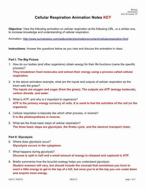 Cellular Respiration Worksheet Answer Key Best Of Cellular Respiration Animation Notes Key