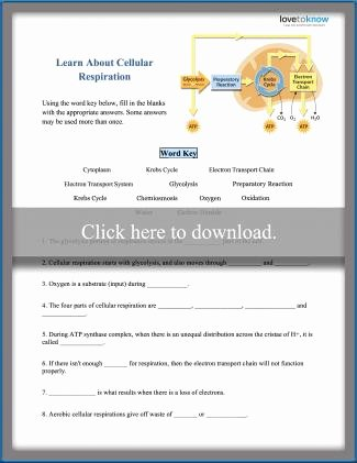Cellular Respiration Worksheet Middle School Kids Cellular Respiration Worksheets for Middle School