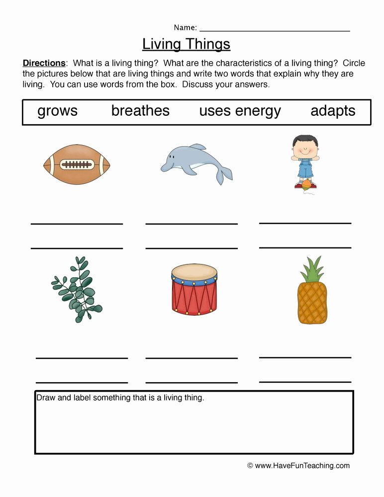 Characteristics Of Living Things Worksheet Printable Describing Characteristics Living Things Worksheet