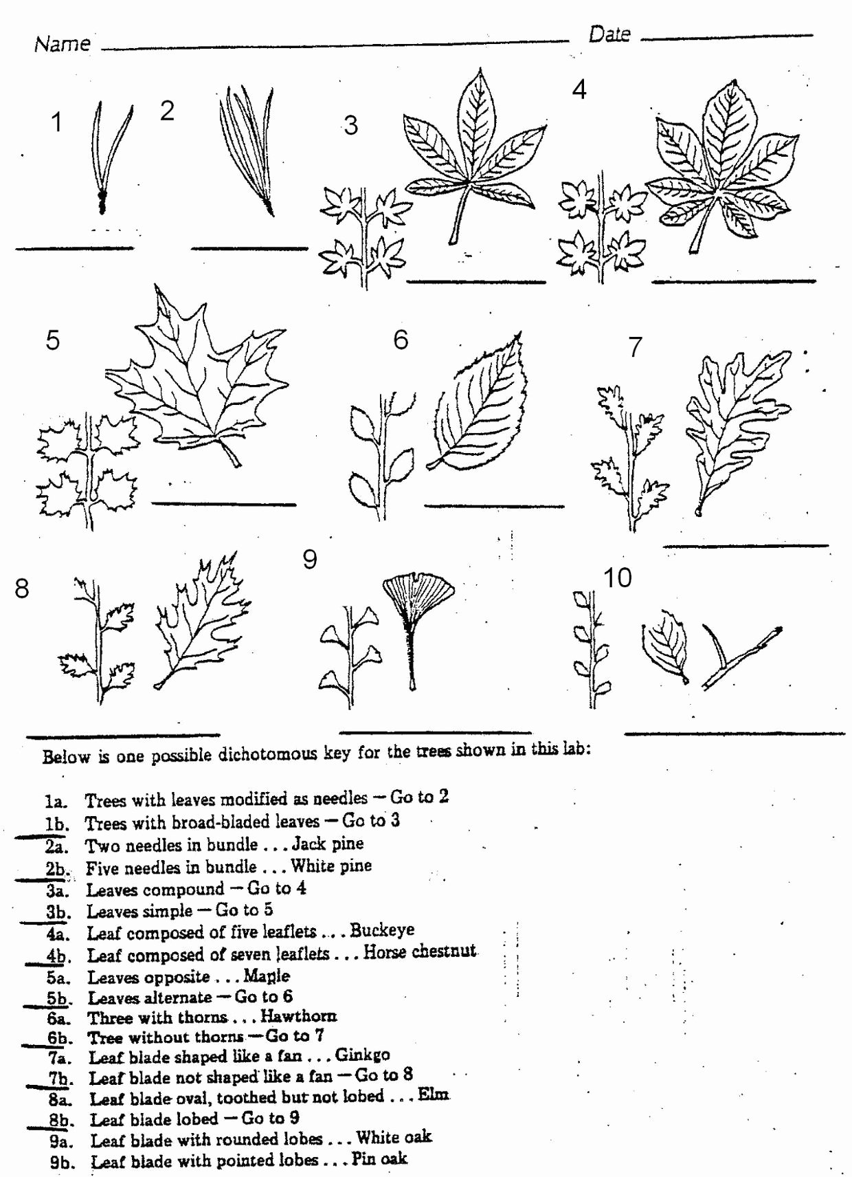 Dichotomous Key Worksheets Middle School Free Describes Dichotomous Keys Examples Of Dk S Thinglink