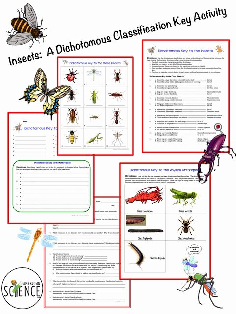 Dichotomous Key Worksheets Middle School Printable Amy Brown Science Insects A Dichotomous Classification Key