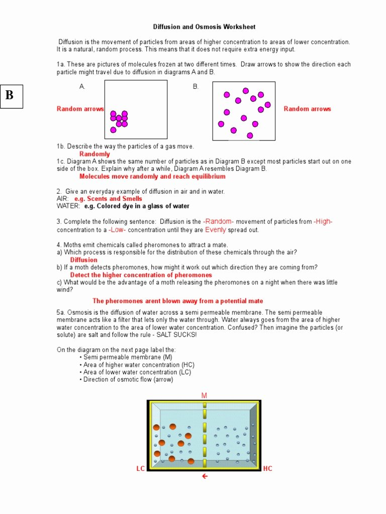 Diffusion and Osmosis Worksheet Answers Ideas Diffusion and Osmosis Worksheet Key 08 Osmosis