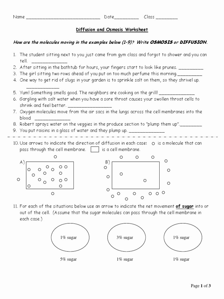 Diffusion and Osmosis Worksheet Answers Lovely 02 Diffusion and Osmosis Worksheet Osmosis