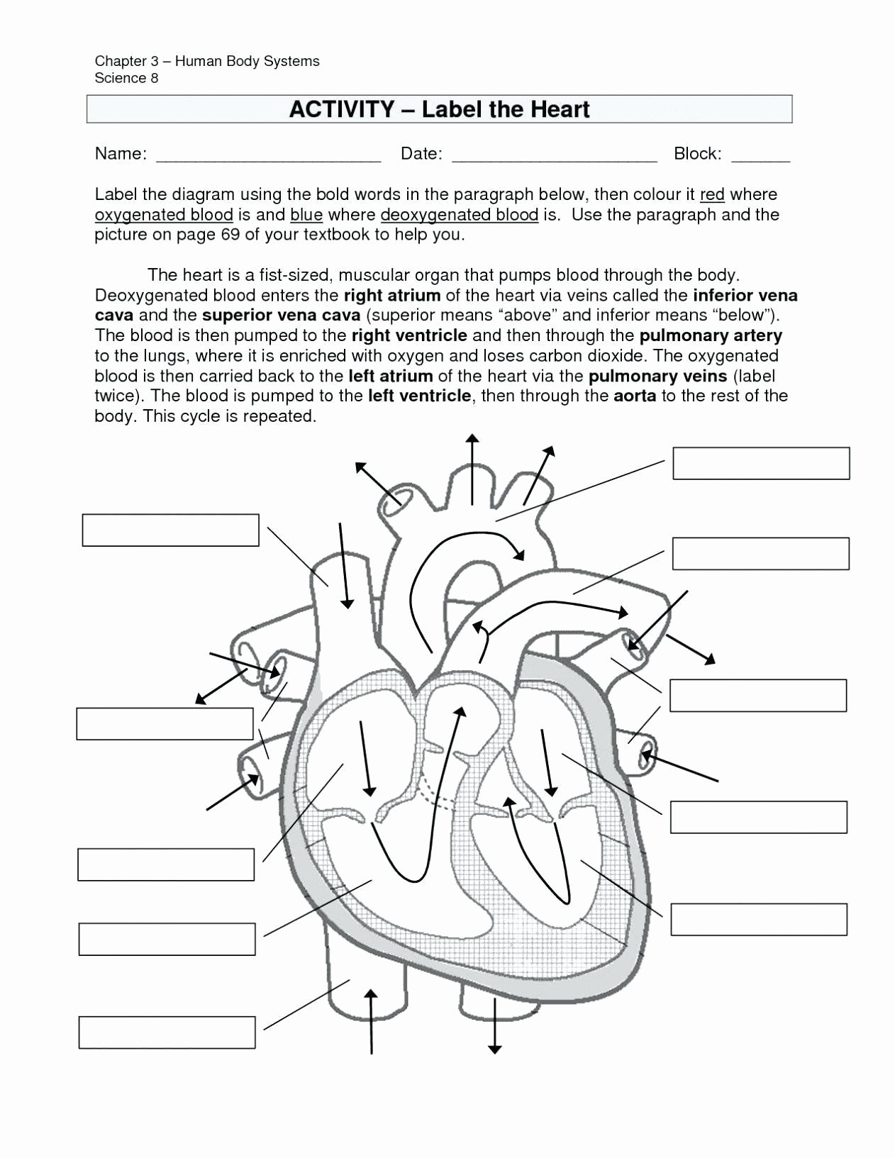 Digestive System Worksheet Answer Key Best Of Digestive System Worksheet Answer Key Pin Coloring Pages
