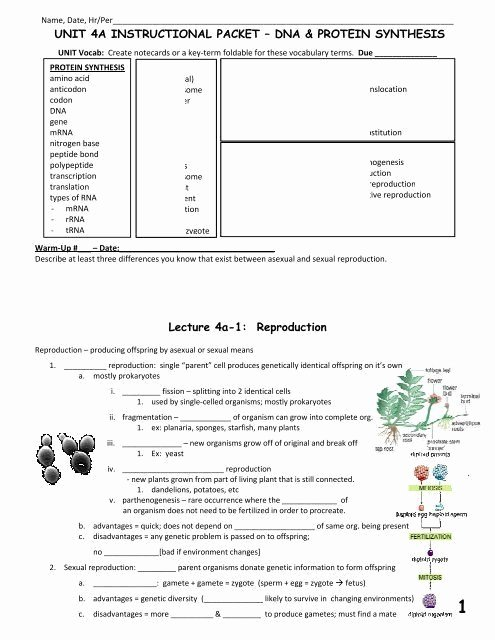 Dna Mutation Practice Worksheet Answers Best Of Dna Mutations Practice Worksheet Answer Unit 4a Packet