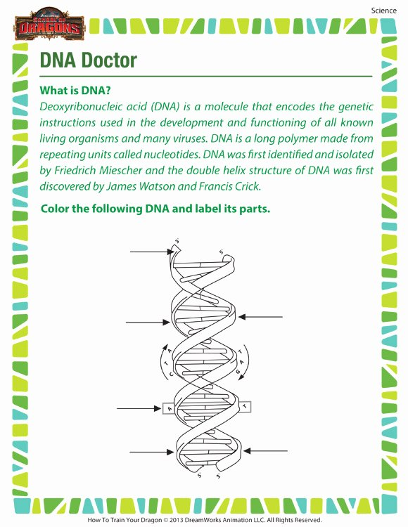 Dna the Double Helix Worksheet Free Dna Doctor – Free Dna Worksheet for 7th Grade Kids