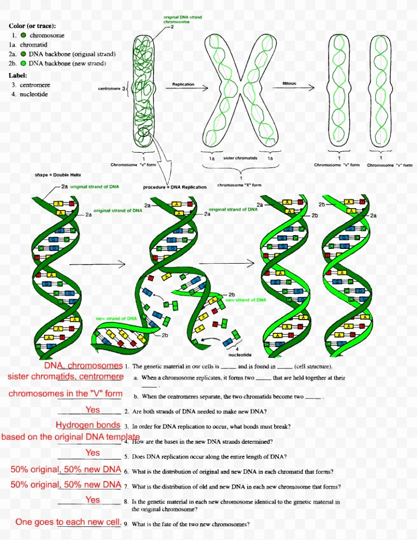Dna the Double Helix Worksheet Fresh the Double Helix A Personal Account the Discovery the