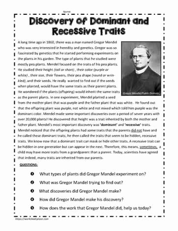 Dominant and Recessive Traits Worksheet Best Of Dominant Recessive Traits Info Worksheets