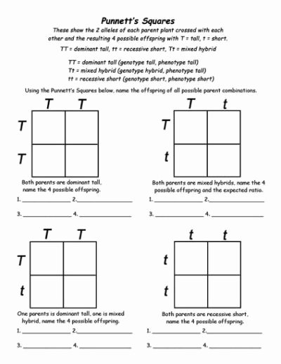 Dominant and Recessive Traits Worksheet Best Of Genetics Info and Punnett Square