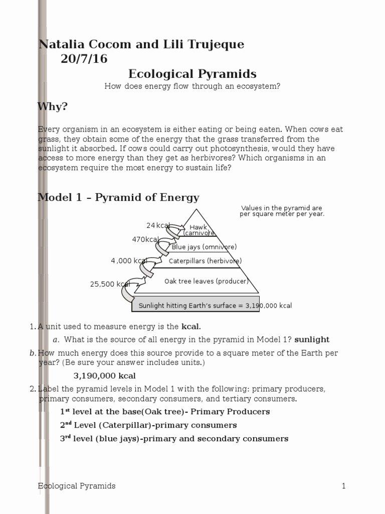 Ecological Pyramids Worksheet Answer Key Best Of 26 Ecological Pyramids Natalia Biomass Ecology