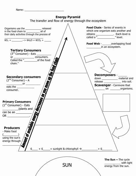 Ecological Pyramids Worksheet Answer Key Best Of Ecological Pyramid Worksheet Energy Pyramid Worksheets