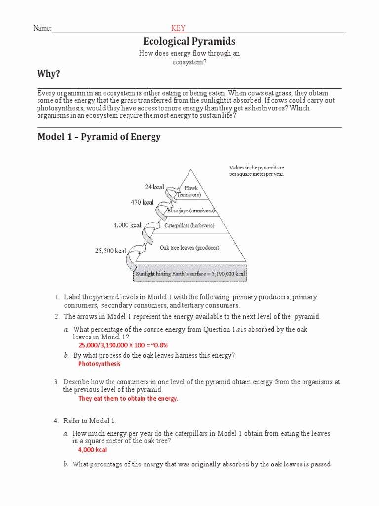 Ecological Pyramids Worksheet Answer Key Free Ecological Pyramids Pogil Key 1617 Pdf Food Web