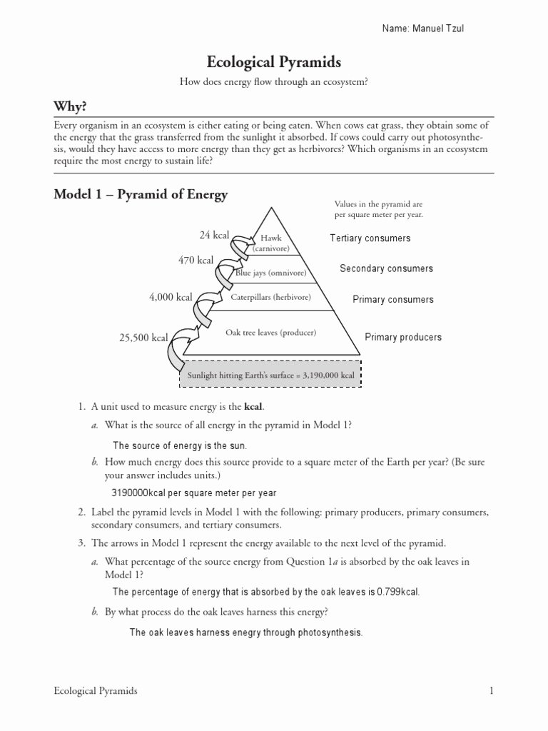 Ecological Pyramids Worksheet Answer Key Inspirational 26 Ecological Pyramids Manuel Tzul Food Web
