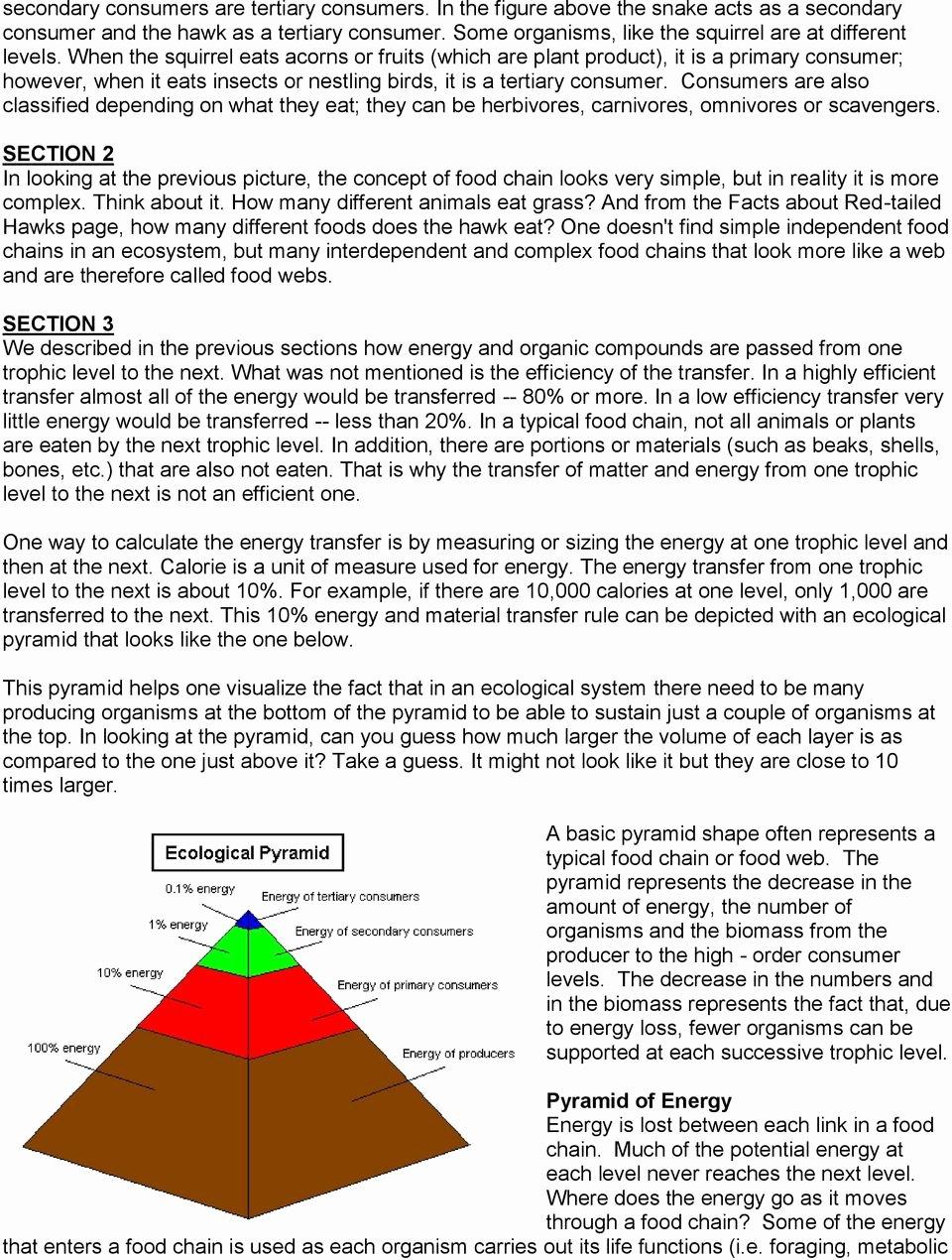 Ecological Pyramids Worksheet Answer Key New Food Chains Food Webs and Ecological Pyramids Pdf Free
