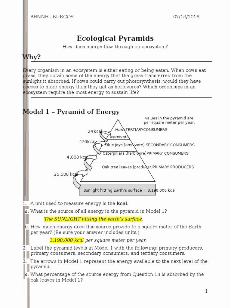 Ecological Pyramids Worksheet Answer Key Printable 26 Ecological Pyramids S Rennel Biomass Ecology