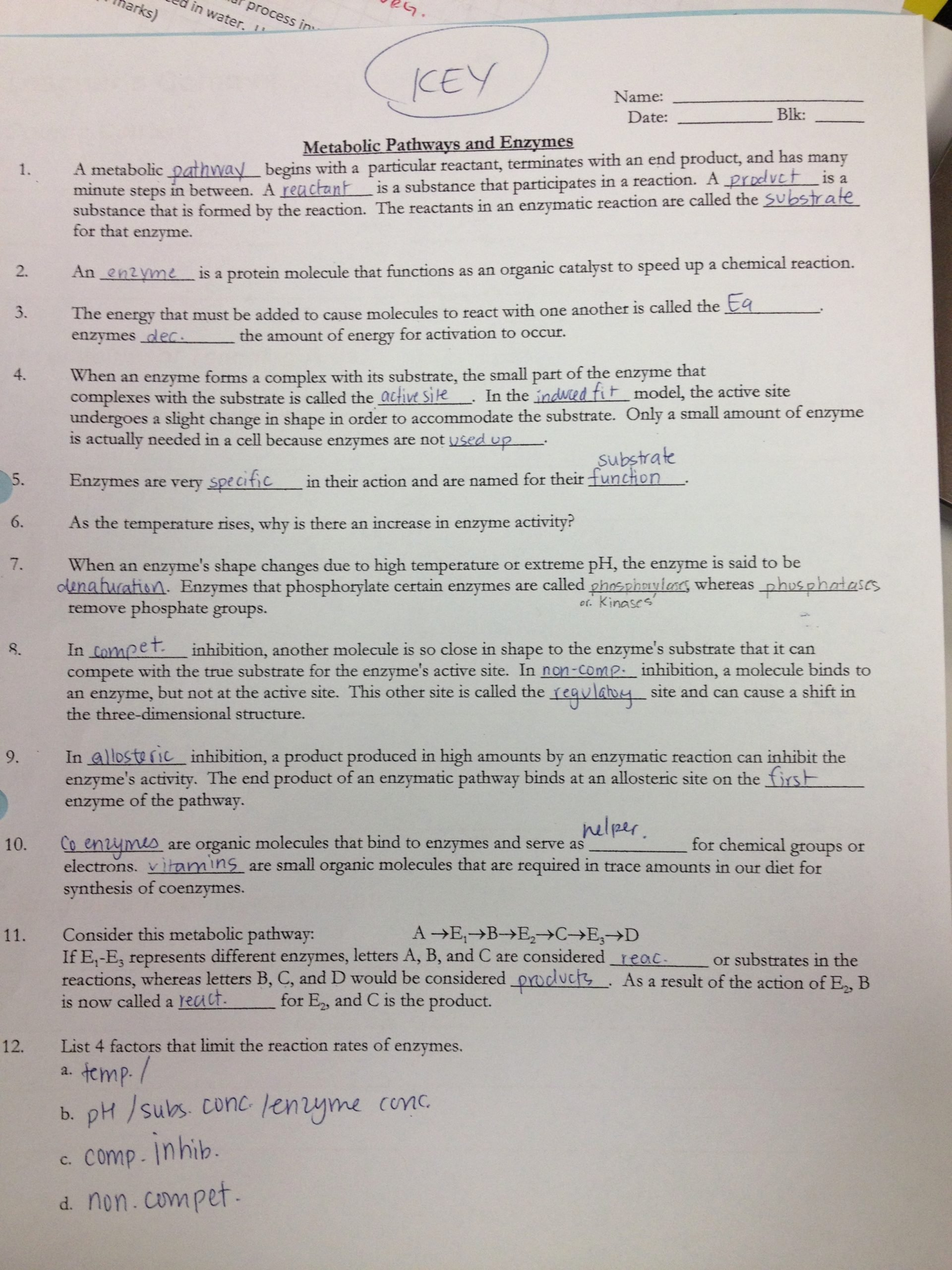 Enzyme Reactions Worksheet Answer Key Best Of Enzyme Worksheet Answers