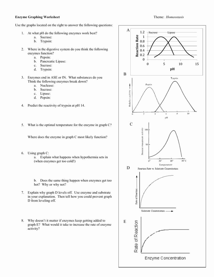 Enzyme Reactions Worksheet Answer Key Free 20 Enzyme Reactions Worksheet Answer Key In 2020