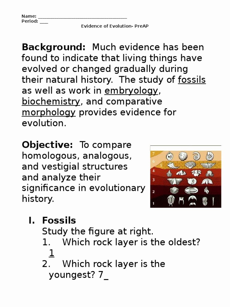 Evidence Of Evolution Worksheet Answers New Evidence Of Evolution Worksheet Murch 2013answers