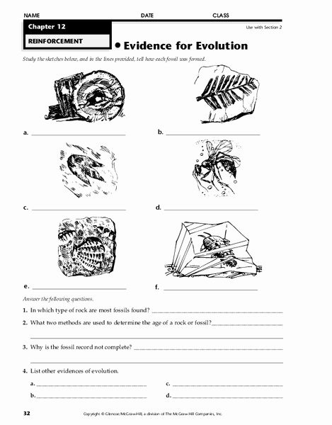 Evidence Of Evolution Worksheet Answers top Evidence for Evolution Worksheet for 7th 12th Grade