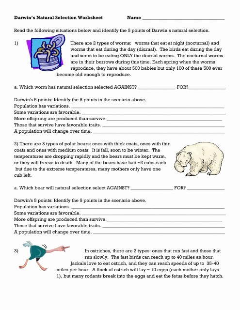 Evolution and Natural Selection Worksheet Best Of Darwin S Natural Selection Worksheet