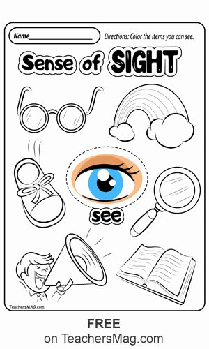Five Senses Worksheets for Kindergarten Free Free Five Senses Worksheets Teachersmag