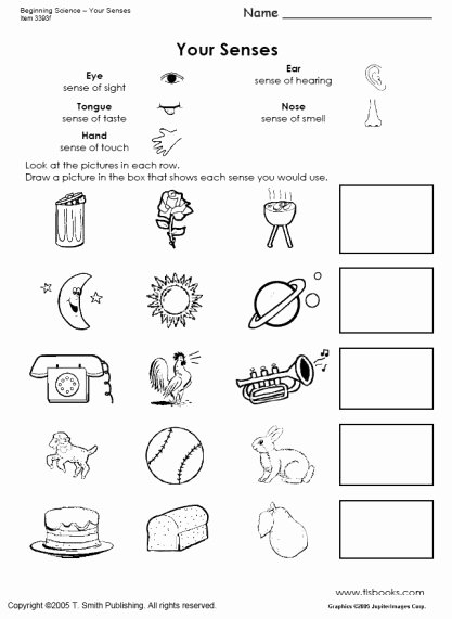 Five Senses Worksheets for Kindergarten Ideas Beginning Science Unit About Your Five Senses