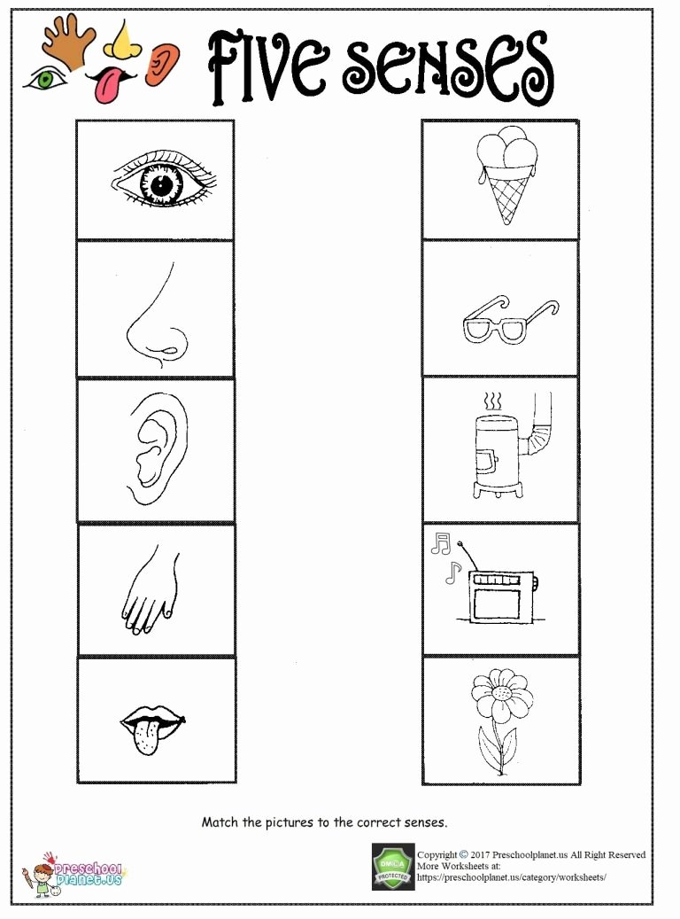Five Senses Worksheets for Kindergarten Lovely Printable Five Senses Worksheet – Preschoolplanet