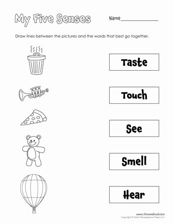 Five Senses Worksheets for Kindergarten Printable A Printable Five Senses Matching Worksheet for Preschool