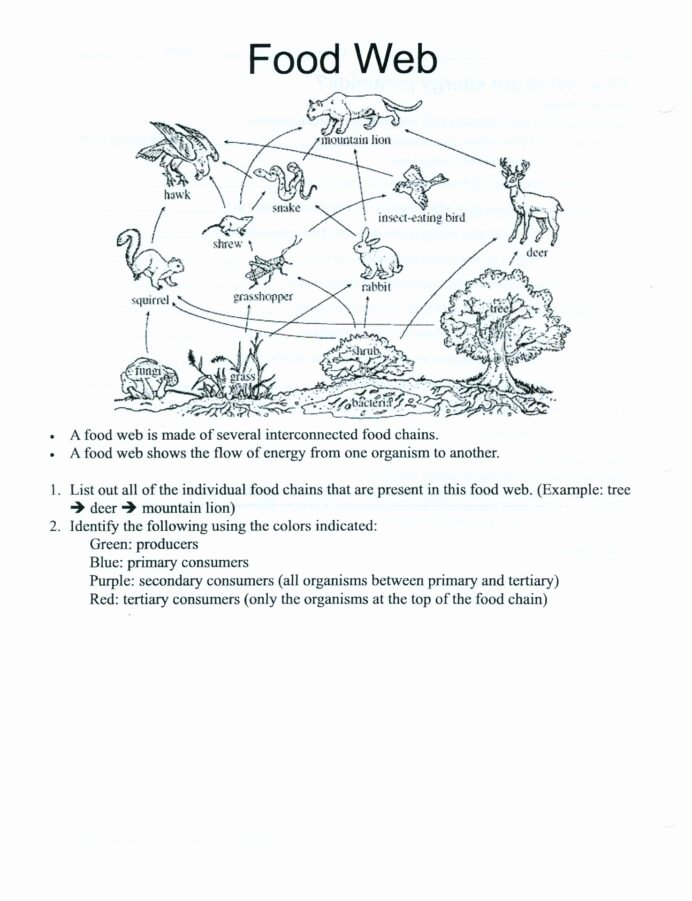 Food Chains and Webs Worksheet Ideas Food Webs Worksheets Slubne Suknie Info Web for High School