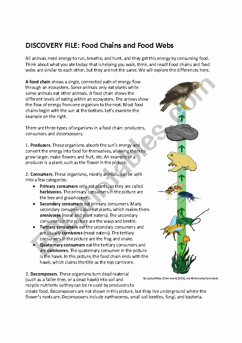 Food Chains and Webs Worksheet Inspirational Food Chains and Webs Esl Worksheet by Timothy Sweeney
