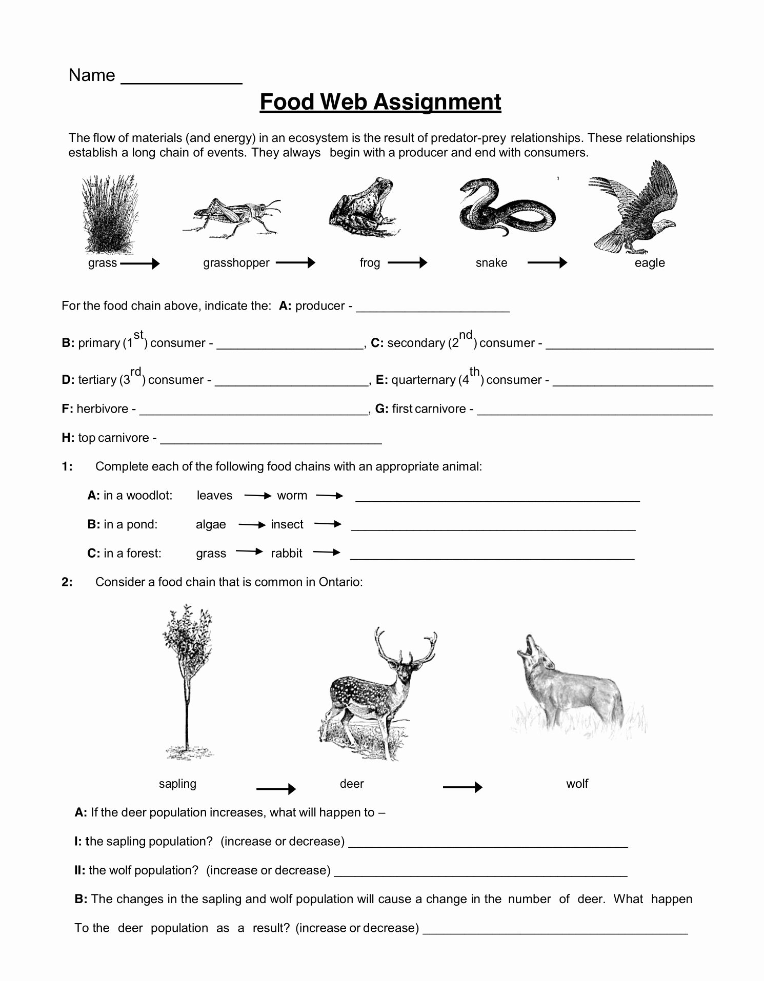 Food Chains and Webs Worksheet Kids Food Web assignment Worksheet Tuesday May 28 2019