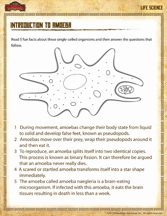 Free Fourth Grade Science Worksheets Inspirational Worksheet Free Printable Worksheets for Grade