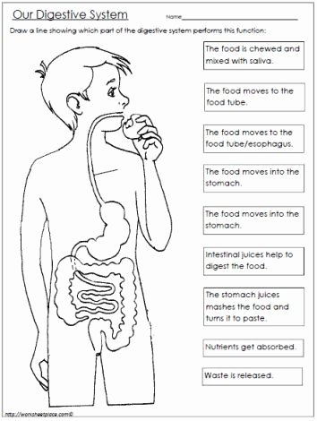 Free Human Body Systems Worksheets Best Of Free Digestive System Worksheet