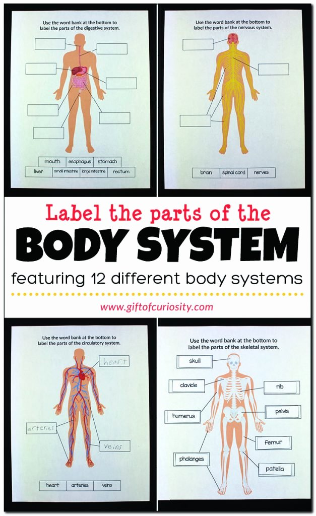 Free Human Body Systems Worksheets Fresh Label the Parts Of the Body System Gift Of Curiosity