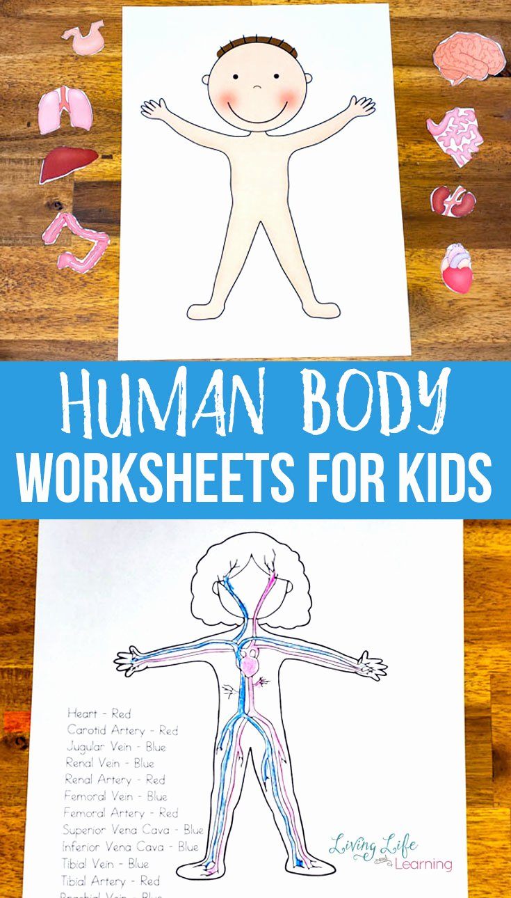 Free Human Body Systems Worksheets Kids Human Body Worksheets for Kids