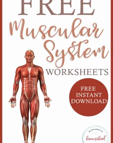 Free Human Body Systems Worksheets top Free Human Body Systems Worksheets Archives In 2020