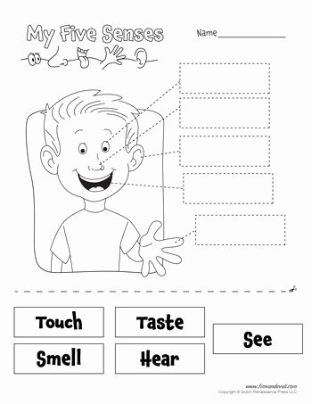 Free Printable Five Senses Worksheets Free Free Five Senses Worksheets for Kids