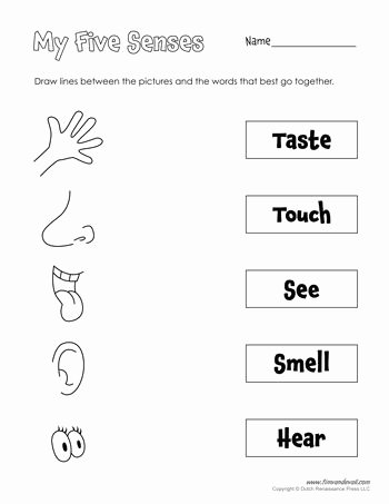 Free Printable Five Senses Worksheets Kids A Collection Of Printables that are Useful for Everyday