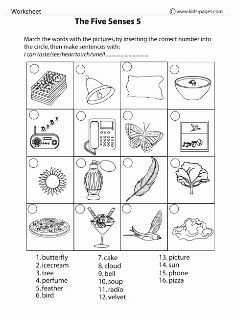 Free Printable Five Senses Worksheets top Five Sense Worksheet New 90 the Five Senses Worksheet Pdf