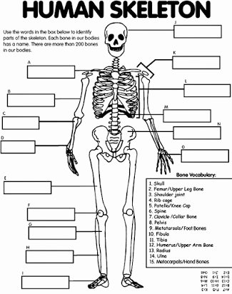 Free Printable Human Anatomy Worksheets Inspirational Free Skeletal System Worksheets