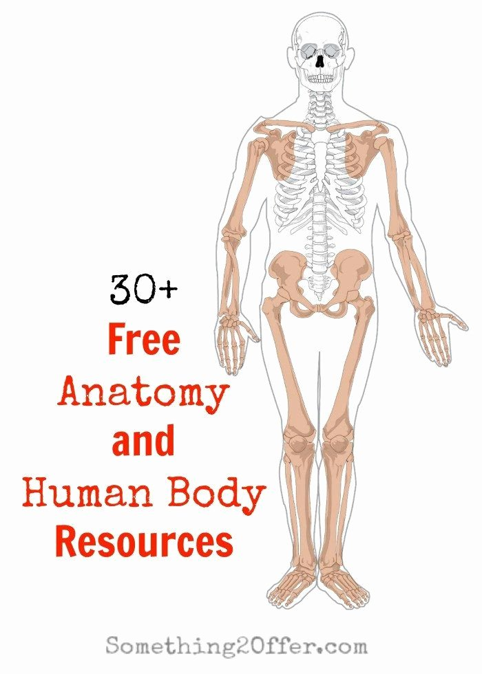 Free Printable Human Anatomy Worksheets Kids Free Printable Human Anatomy Worksheets Free Anatomy and