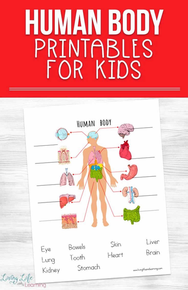 Free Printable Human Anatomy Worksheets Kids Human Body Printables for Kids