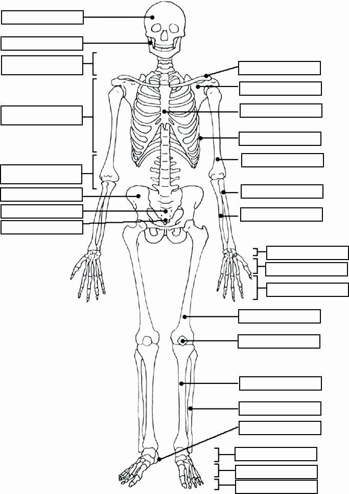 Free Printable Human Anatomy Worksheets Lovely Printable Horse Anatomy Worksheets Free Anatomy Worksheets