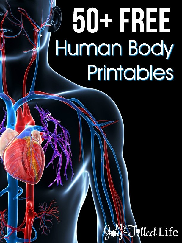 Free Printable Human Anatomy Worksheets Printable 50 Free Human Body Printables My Joy Filled Life