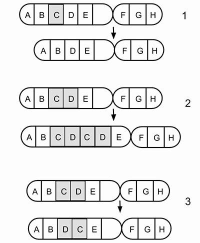 Gene and Chromosome Mutation Worksheet Best Of Genetic Mutations